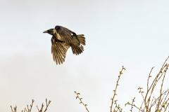 crowflies1